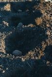 Flancowanie grule na życiorys ogródzie Sezonowa praca rydla kapinosa jamy dla zasadzać grule w wiośnie obrazy royalty free