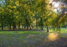 flancowanie w parku Zdjęcie Royalty Free