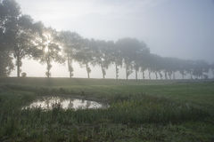 Flanders landscape. A typical landscape from the countryside at Flanders, Belgium Royalty Free Stock Image