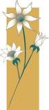 Flanell-Blumen Stockfoto