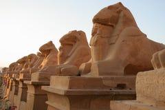 Flank van de sfinx van de Ram royalty-vrije stock afbeelding