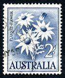 Flannel Flower Australian Postage Stamp. AUSTRALIA - CIRCA 1959: A used postage stamp from Australia, depicting an illustration of a Flannel Flower, circa 1959 Royalty Free Stock Photo