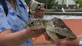 Sea turtle being held by person. Flapping sea turtle being held green stock video
