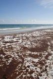 Flaque de pétrole sur la plage le juin 2010 Photo libre de droits