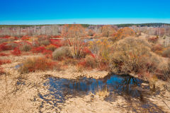 Flaques de saison de rivière au printemps Jour de source ensoleillé Belle La Image libre de droits