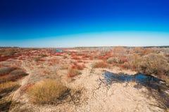 Flaques de saison de rivière au printemps Jour de source ensoleillé Belle La Photographie stock libre de droits