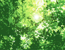 Flare in the leaves. A lens flare reflects light onto leaves in this scalable vector illustration Stock Images