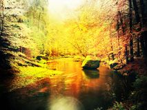 Autumn colorful forest above mountain river. Water under leaves trees. Low level with yellow orange  reflection. Flare, soft focus. Autumn colorful forest above Royalty Free Stock Photo