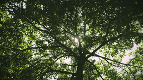 Flare and Tree. Under a majestic tree, forest and a beautiful sun stock footage