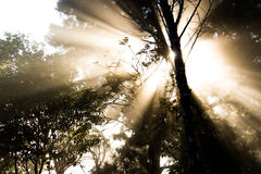 Flare between trees. The light of the sun through the  forest Stock Photo