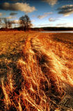 Flaring grass Royalty Free Stock Image