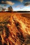 Flaring grass. Czech republik,South Bohemia, Bohemian Forest Royalty Free Stock Image