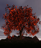 Flaring tree. Beautiful fantastic lonely tree with fiery leaves Royalty Free Stock Photos