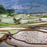 Flarmer plowing terraced rice fields, China Stock Photography