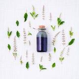 Flasche ätherisches Öl mit frischen heiligen Basilikumblättern und -blumen lizenzfreies stockfoto