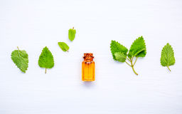 Flasche ätherisches Öl mit frischer Melisse lässt Einrichtung mit lizenzfreie stockbilder