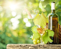 Flasche des weißen Weins, Rebe, Glas und Weintraube Lizenzfreie Stockfotos