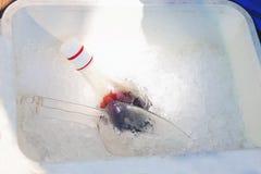 Flasche im Eis Stockbilder