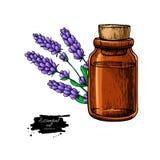 Flasche Lavander-ätherischen Öls und Blumenstrauß übergeben gezogenes VE vektor abbildung