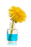 Flasche mit blauer Flüssigkeit und gelbem Löwenzahn Lizenzfreie Stockbilder