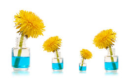 Flasche mit blauer Flüssigkeit und gelbem Löwenzahn Stockbilder