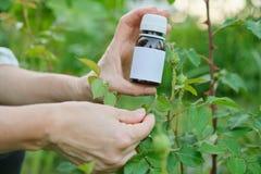 Flasche mit chemischem Insektenvertilgungsmittel in den Gärtnern übergeben Nahaufnahme, Hintergrund Plage-plagte Blattlausinsekte lizenzfreie stockfotos