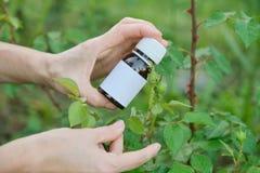 Flasche mit chemischem Insektenvertilgungsmittel in den Gärtnern übergeben Nahaufnahme, Hintergrund Plage-plagte Blattlausinsekte stockfotos