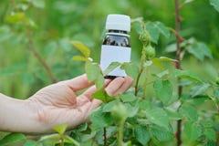 Flasche mit chemischem Insektenvertilgungsmittel in den Gärtnern übergeben Nahaufnahme, Hintergrund Plage-plagte Blattlausinsekte stockbilder