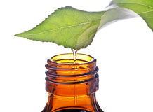 Flasche mit Homöopathiebalsam und -blatt Stockfoto