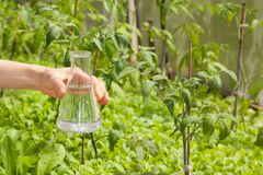 Flasche mit klarem Wasser und Grünpflanzen Lizenzfreie Stockfotografie