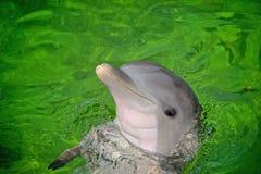 Flasche roch Delphin Lizenzfreies Stockbild