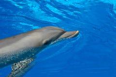 Flasche roch Delphin Stockbild
