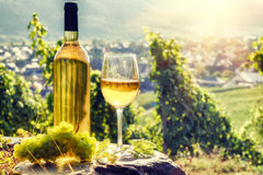 Flasche und volles Glas Weißwein über Weinberghintergrund Stockfotografie