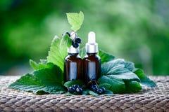 Flaschen mit Öl der schwarzen Johannisbeere, frischen Beeren und Blättern auf einem Na lizenzfreie stockfotos