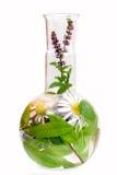 Flaschen mit medizinischen Kräutern Lizenzfreies Stockfoto