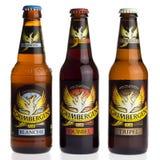 Flaschen von Grimbergen blondes, Dubbel und Tripel Bier Stockfoto