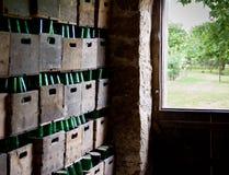 Flaschen Zider Stockbilder