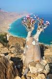 Flaschenbaum - Adenium obesum Lizenzfreies Stockbild