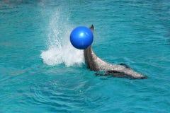 Flaschenwekzeugspritzen-Delphinspielen Stockfoto