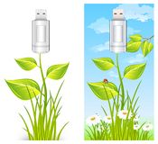 Flash drive & plant Royalty Free Stock Images