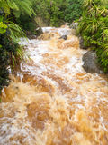 Flash flood in West Coast creek, NZ South Island Royalty Free Stock Image