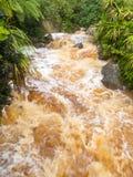 Flash flood in West Coast creek, NZ South Island. Flash flood after heavy rain raging towards West Coast of South Island, New Zealand royalty free stock image