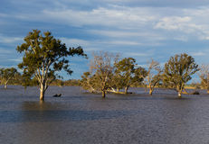 Flash floods. Aftermath of flash floods, fallen trees Royalty Free Stock Photos