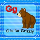 Flashcard信件G是为北美灰熊 皇族释放例证