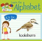 Flashcard alfabet K är för skrattfågel stock illustrationer