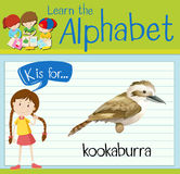 Flashcard alphabet K is for kookaburra Royalty Free Stock Photography