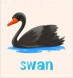 Flashcard animal avec le cygne sur l'eau Photo libre de droits