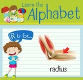 Flashcard bokstav R är för radie vektor illustrationer