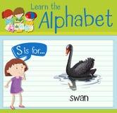 Flashcard bokstav S är för svan Royaltyfri Bild
