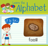 Flashcard-Buchstabe F ist für Fossil Lizenzfreie Stockfotos